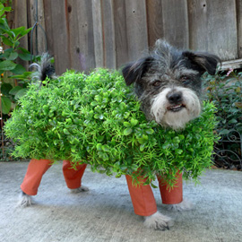 Chia Pet Dog Costume
