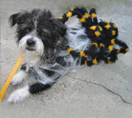 Spider Bait Dog Costume